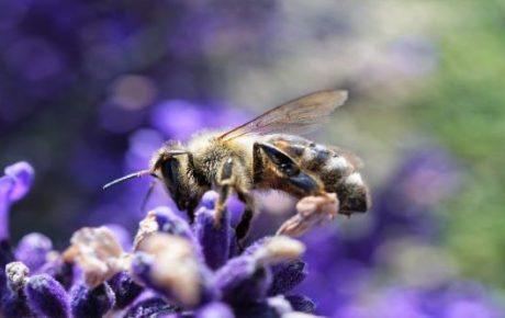 biodiversidad en la informaci贸n no financiera